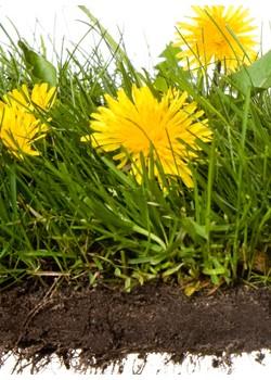 LC-310检测土壤及沉积物中多环芳烃残留量