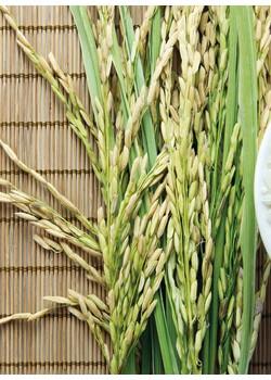 天瑞仪器打造粮食安全整体解决方案