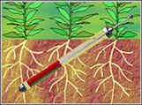 CI600植物根系生长监测系统(CI-690ROOTSNAP 根系分析软件系统)
