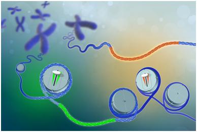 重磅!多篇Nature揭示调节人基因表达的基因组图谱