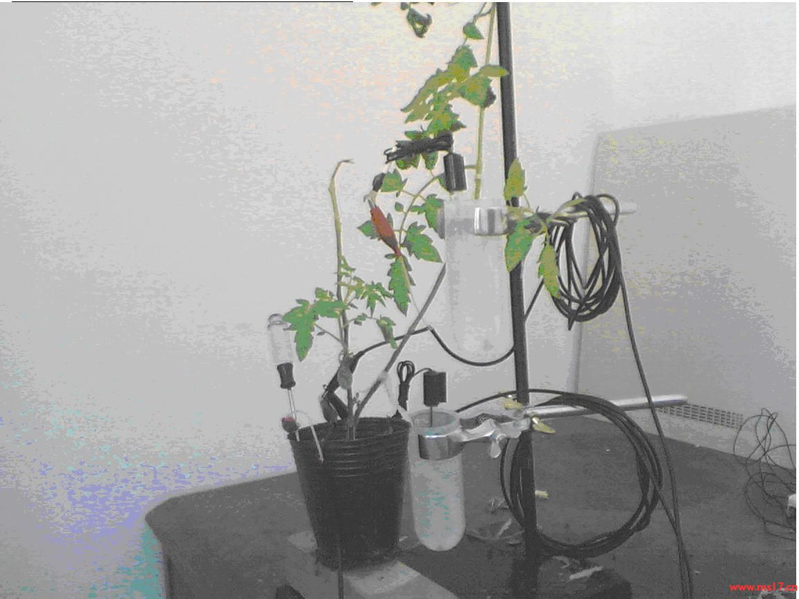 多道植物电信号监测系统